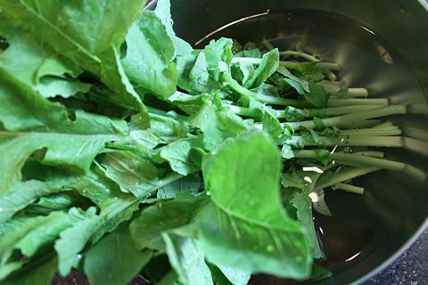 大根菜を洗う