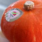 奥会津金山の赤かぼちゃ